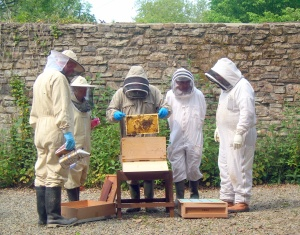 Inspecting a hive at Scolton Manor 1