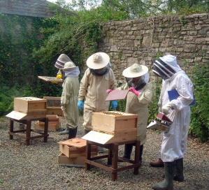 Inspecting a hive at Scolton Manor 3