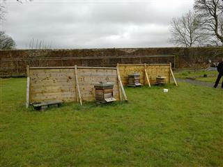 Hives needed the windbreaks - but wind coming from an unusual direction.