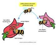 pollination_1