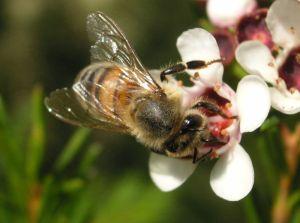 wpid-honeybee.jpg