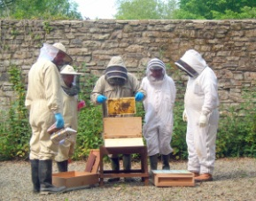inspecting-a-hive-at-scolton-manor-1