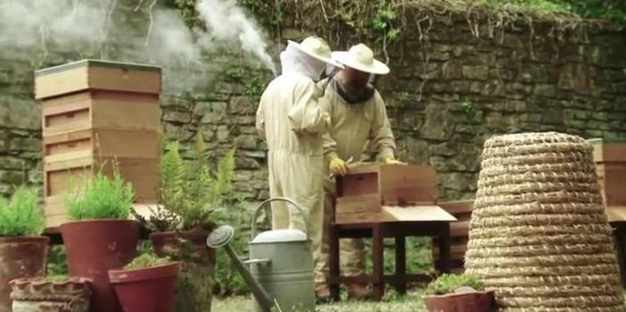 Inspecting a hive in the new apiary